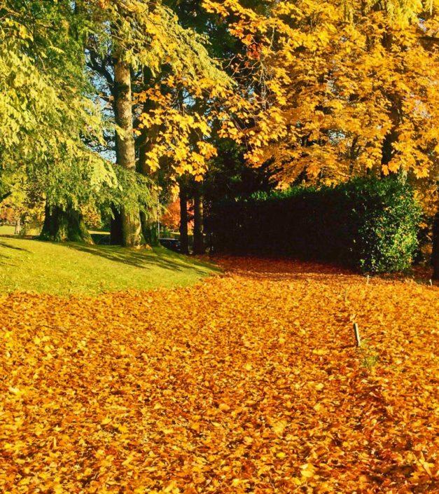 parc domaine Bonmont feuilles mortes automne