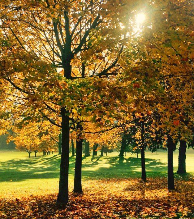 Arbres parc Bonmont automne