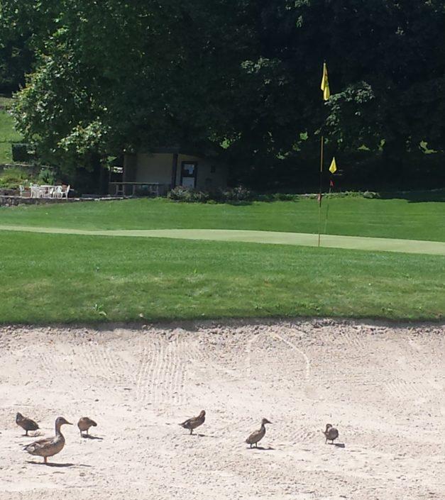 Canards parcours de golf domaine Bonmont
